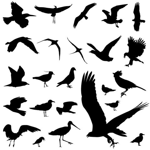 tattoo birds. Bird Tattoo Designs