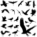 bird-tattoo-design-1.jpg